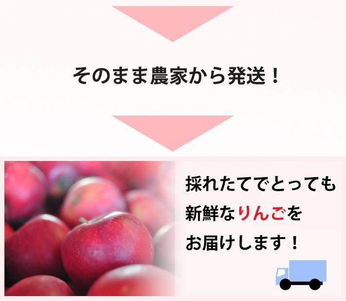 新鮮なりんごを産地直送