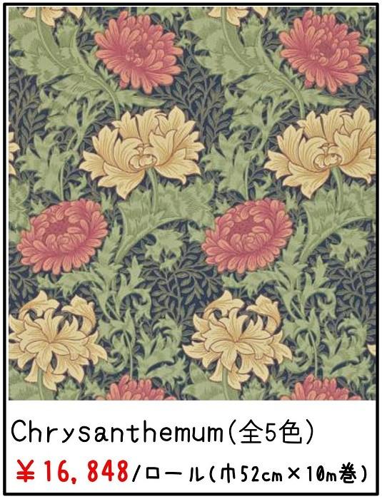 Chrysanthemum(クリサンティマム)