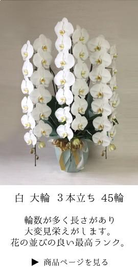 お祝い 胡蝶蘭 コチョウラン ギフト 法人 定番 開業祝 開店祝い 開院祝い 就任祝い 周年 高級