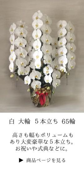 お祝い 胡蝶蘭 コチョウラン ギフト 法人 定番 開業祝 開店祝い 開院祝い 就任祝い 周年 式典