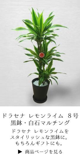 観葉植物 お祝い ドラセナ 幸福の木 ギフト 法人 定番 開業祝 開店祝い 開院祝い 就任祝い 周年 式典