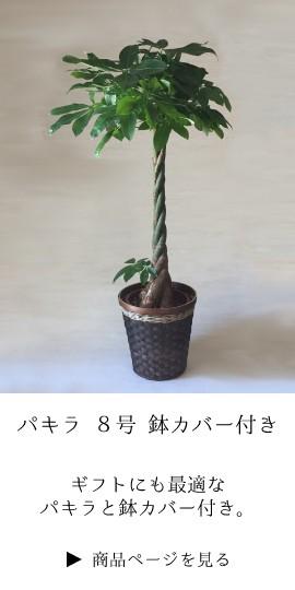 観葉植物 お祝い パキラ 発財樹 ギフト 法人 定番 開業祝 開店祝い 開院祝い 就任祝い 周年 高級