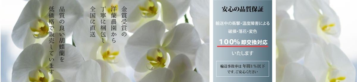胡蝶蘭の販売・全国配送 FS胡蝶蘭 胡蝶蘭 観葉植物 フラワーギフト グリーンギフト インテリアグリーン