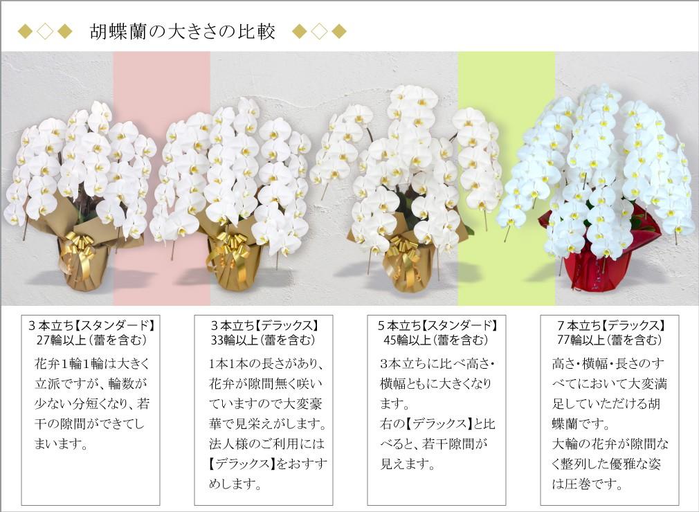 胡蝶蘭、輪数による大きさの違い、比較