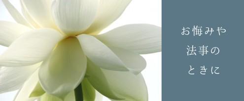 お悔やみ 御供え 法事 線香 香典 供花 お葬式 お別れ 胡蝶蘭 コチョウラン