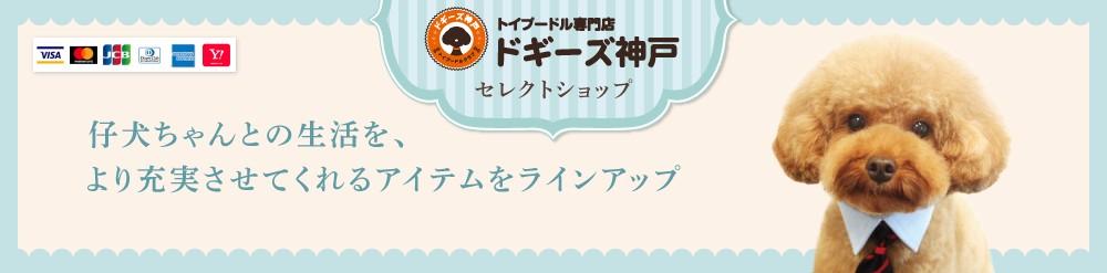 トイプードル専門店 ドギーズ神戸