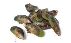 Zealandia ジーランディア キャットフード 緑イ貝