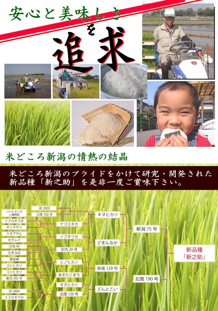 米どころ新潟のプライドの結晶 新之助