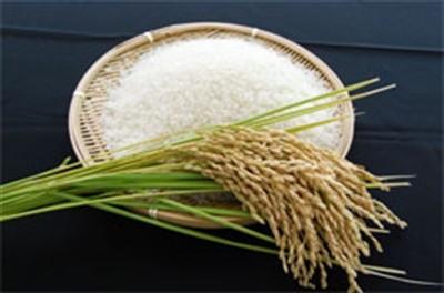 無洗米,新米,お米,コシヒカリ