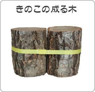 きのこの成る木