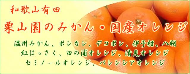 和歌山有田栗山園のみかん・オレンジ