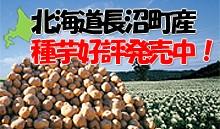 長沼町種芋