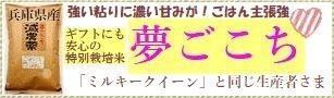 兵庫県産「夢ごこち」