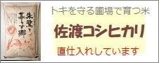 新潟県産「佐渡コシヒカリ」