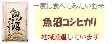 新潟魚沼産「コシヒカリ」