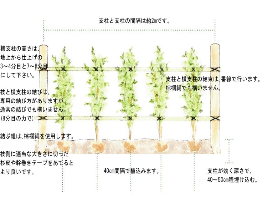 生垣 支柱の仕方