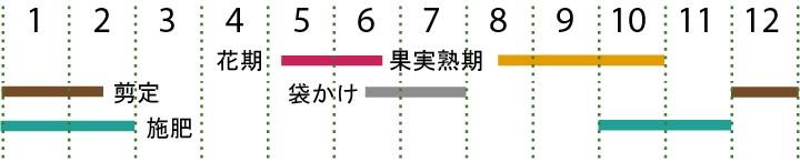 開花カレンダー(ロザリオビアンコ)