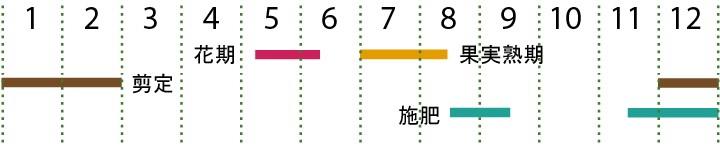 開花カレンダー(早生デラウエア)