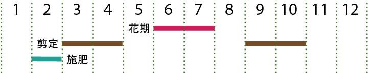 開花カレンダー(枝垂れ梅)