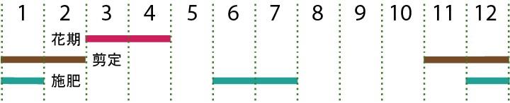 開花カレンダー(ソメイヨシノ)