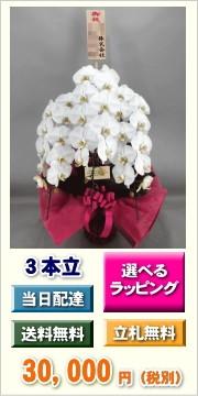 胡蝶蘭 3本立ち 30,000円