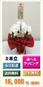 ミディ胡蝶蘭 3本立ち 16,000円