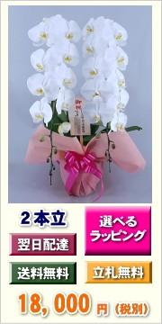 胡蝶蘭 2本立ち 18,000円