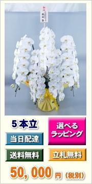 胡蝶蘭 5本立ち 50,000円
