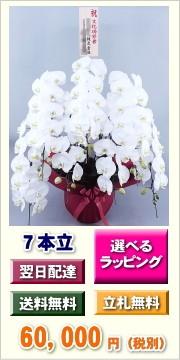 胡蝶蘭 7本立ち 60,000円