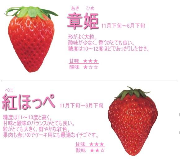 長野県産イチゴ章姫、紅ほっぺ