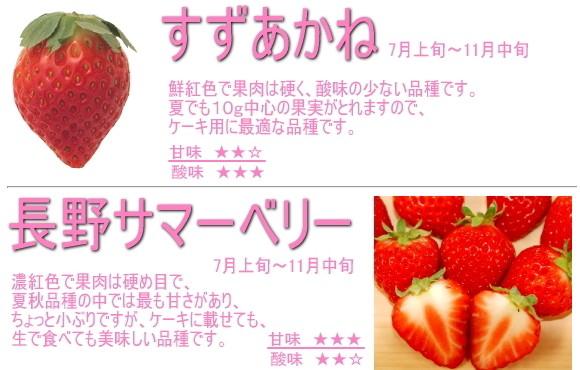 長野県産イチゴ すずあかね,長野サマーベリー