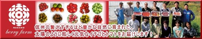 信州産トマト、イチゴの生産販売『長野ベリーファーム様』