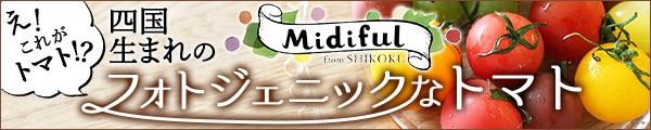 カラフルトマト ミディフル