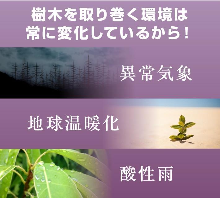 樹木を取り巻く環境は常に変化しているから!