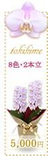 胡蝶蘭5,000円