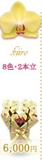 胡蝶蘭6,000円