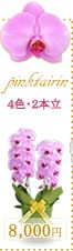 胡蝶蘭8,000円