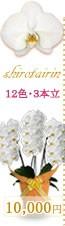胡蝶蘭10,000円