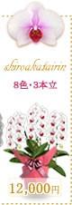 胡蝶蘭12,000円