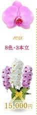 胡蝶蘭15,000円