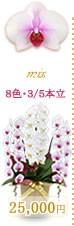 胡蝶蘭25,000円