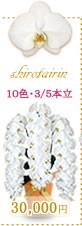 胡蝶蘭30,000円