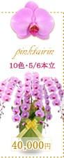 胡蝶蘭40,000円