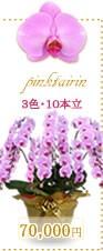 胡蝶蘭70,000円