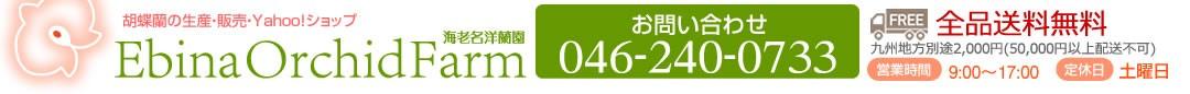 胡蝶蘭の生産・販売 海老名洋蘭園 丹精込めて育てあげた胡蝶蘭をどうぞ。