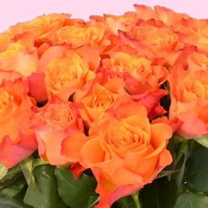 バラ 花束 200円/1本還暦祝い 選べるカラー 30本〜始めました。フラワーギフト プレゼント プロポーズ 花 花束 還暦祝い 敬老の日【rose】|ebina-youran|08