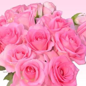 バラ 花束 200円/1本還暦祝い 選べるカラー 30本〜始めました。フラワーギフト プレゼント プロポーズ 花 花束 還暦祝い 敬老の日【rose】|ebina-youran|06
