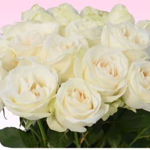 バラ 花束 200円/1本還暦祝い 選べるカラー 30本〜始めました。フラワーギフト プレゼント プロポーズ 花 花束 還暦祝い 敬老の日【rose】|ebina-youran|09