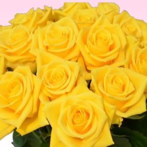 バラ 花束 200円/1本還暦祝い 選べるカラー 30本〜始めました。フラワーギフト プレゼント プロポーズ 花 花束 還暦祝い 敬老の日【rose】|ebina-youran|07