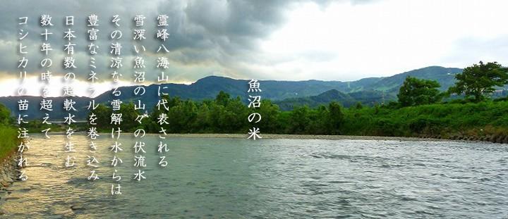 【特選産地米】塩沢産コシヒカリ  1